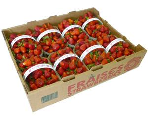 fraise3