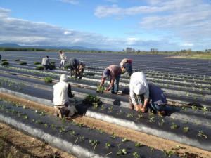 plantation-plug_aot-2012-2